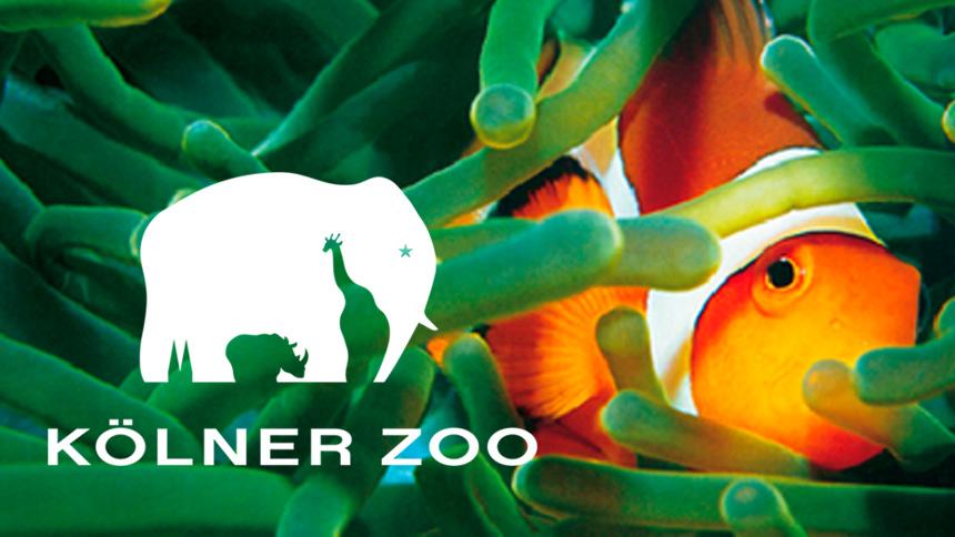 "Kölner Zoo – ""Korallenriff"""